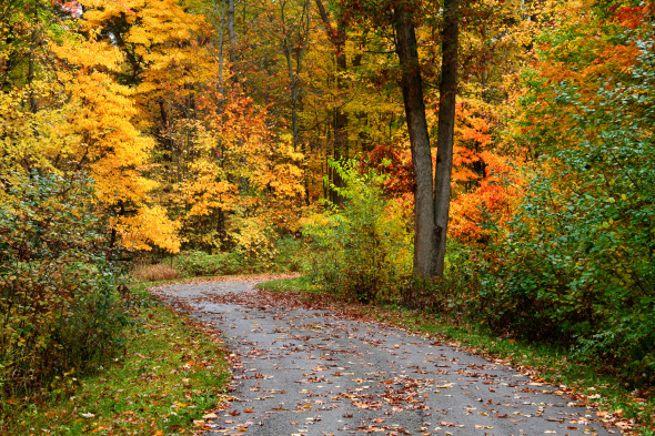 5 Fabulous Fall Scenes | Leisurely Drives for Fall Color